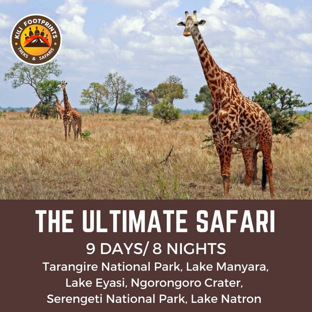 Kili Footprints - The Ultimate Safari Tour