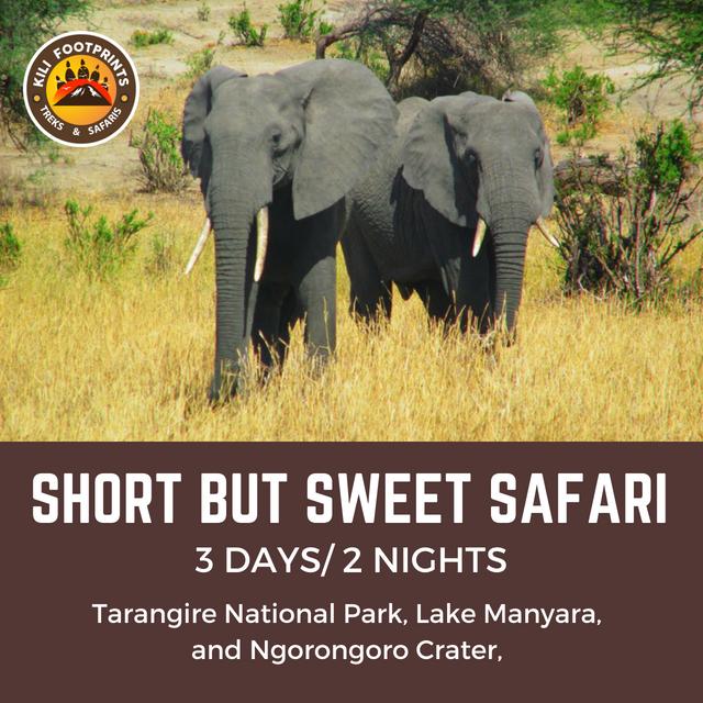 Killi Footprints - Short But Sweet Safari