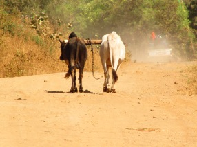 Hotsprings and Maasai Village Cycling Tour