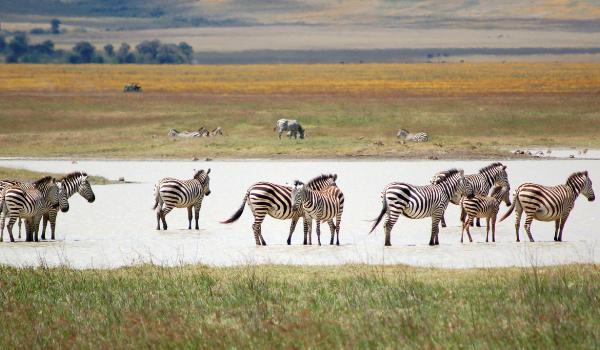 Tanzania safari- kili Footprints