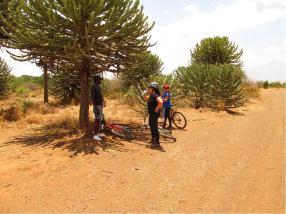 West Kilimanjaro Cycling Safari - Kili Footprints