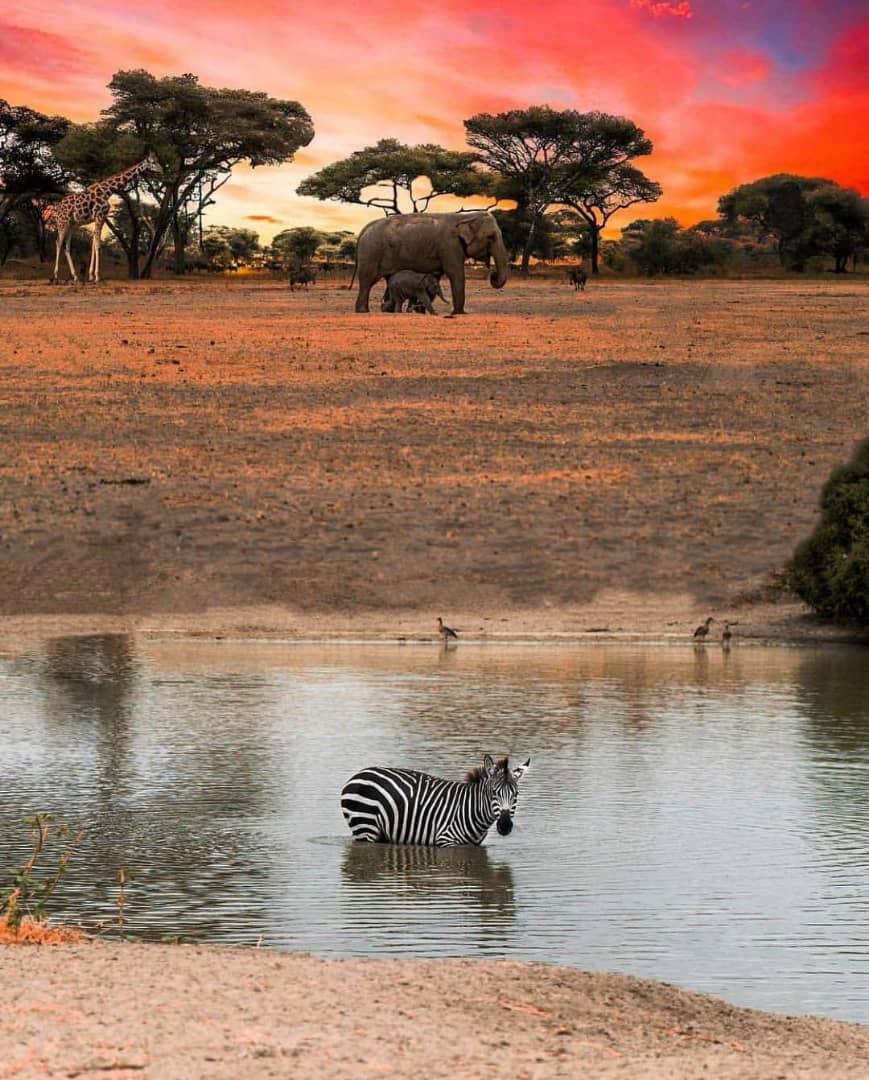 Tarangire-tanzania-game drive